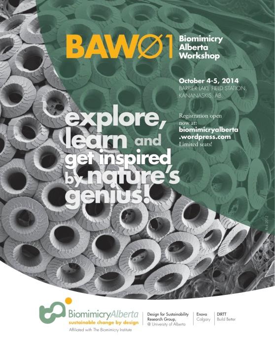 BAW01#7