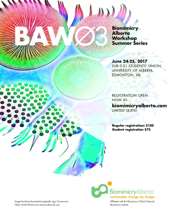 BAW03_poster3 copy-03